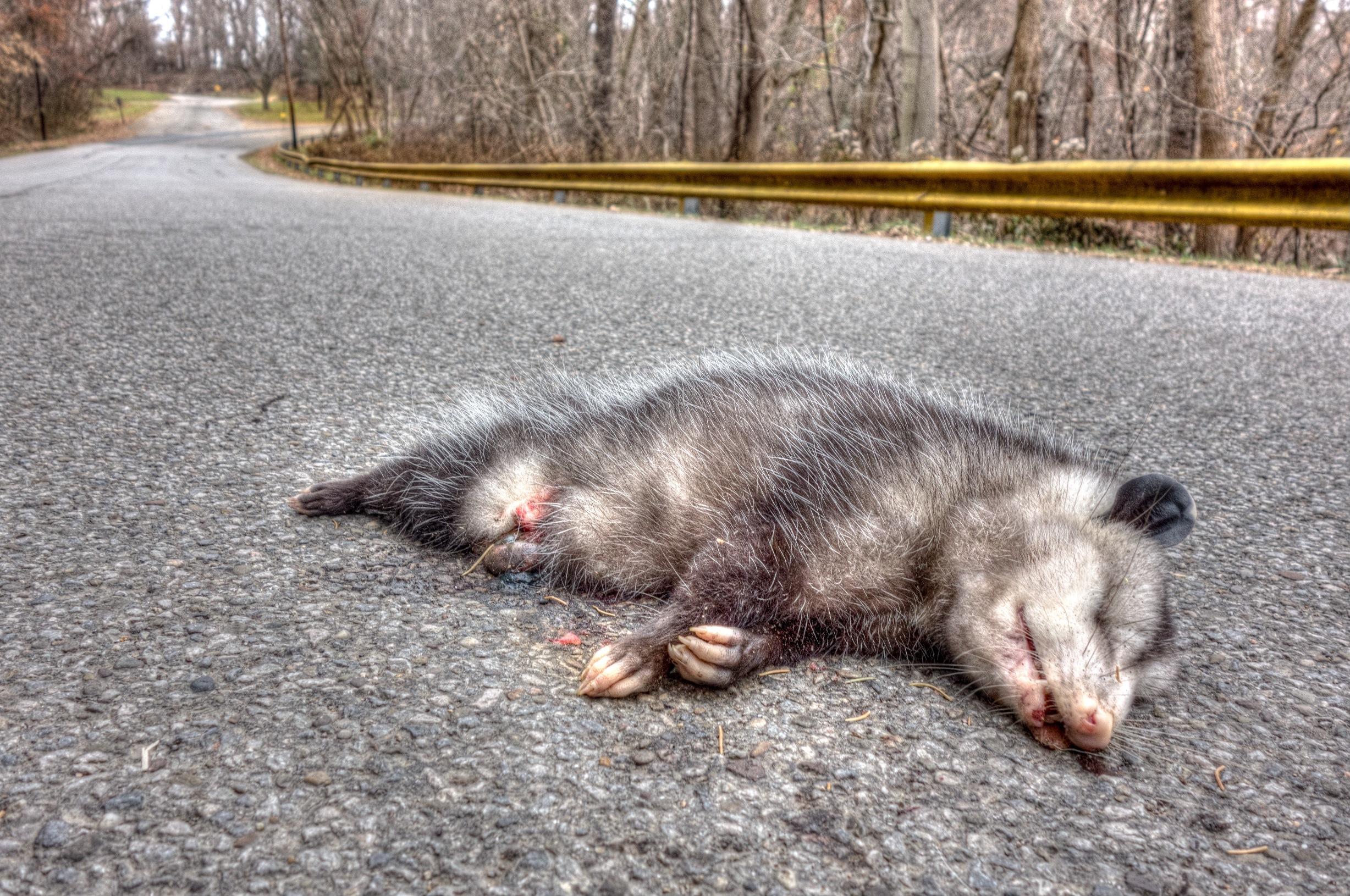 Twenty-Six Roadkills from Twentysix Gasoline Stations