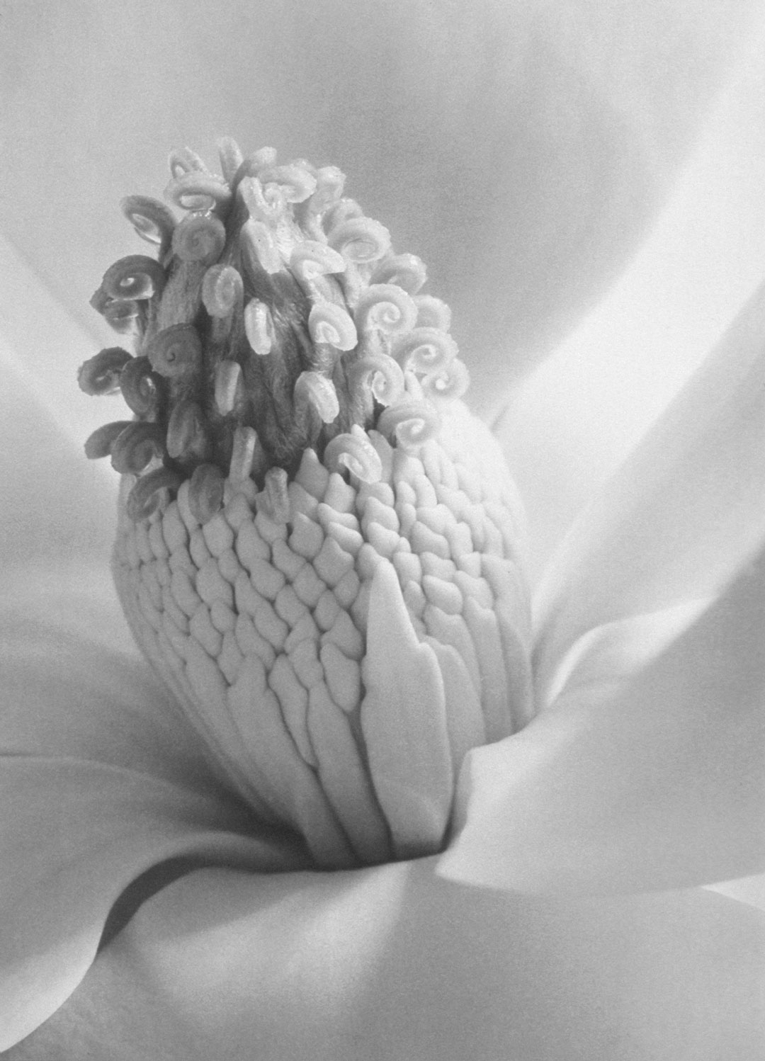 Object of the Week: Magnolia Blossom, Tower of Jewels