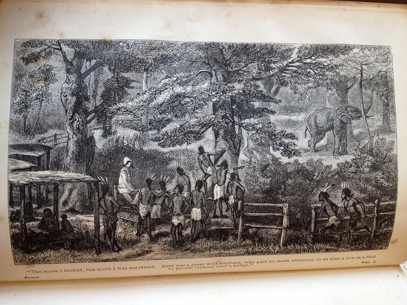 "Engraved frontispiece to The African Sketch-Book:  ""The more I looked, the more I was surprised. Here was a great wild elephant, who paid no more attention to us than a cow in a field to people looking over the hedge."""