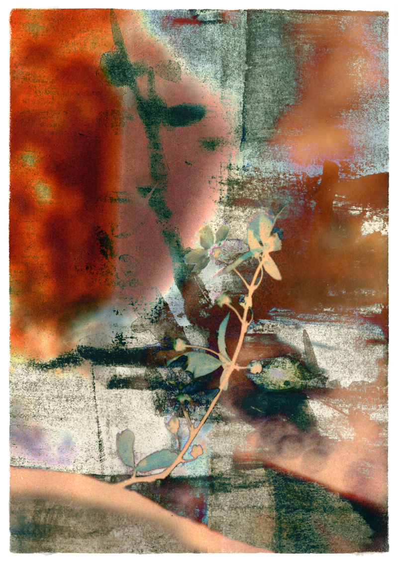 """Iskra Johnson Shows New Work """"Contemplating Nature"""" at SAM Gallery"""