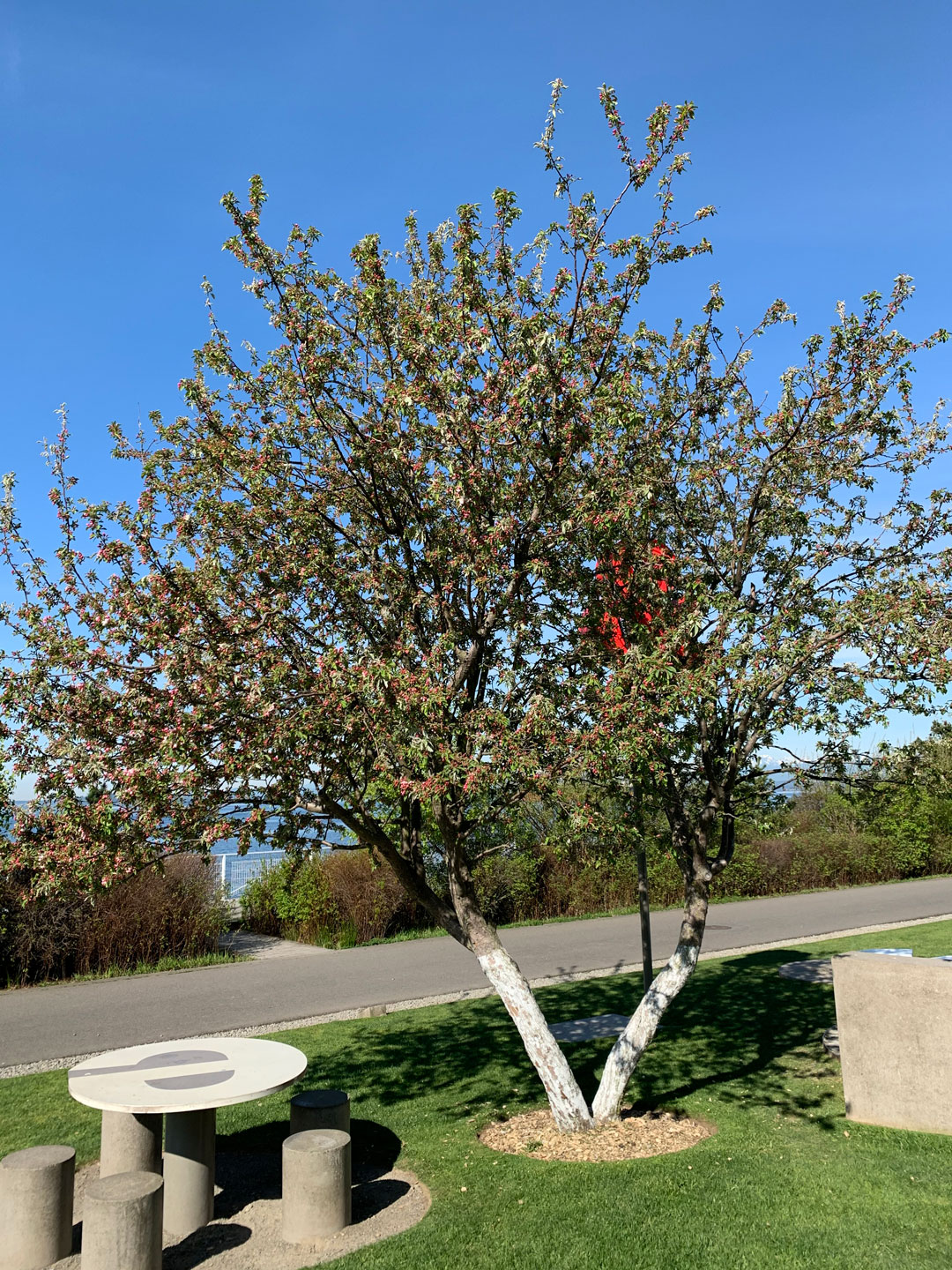 Tour the Olympic Sculpture Park's Trees