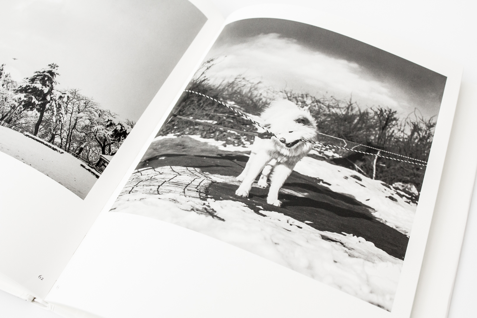 Tsugaru by Masako Tomiya
