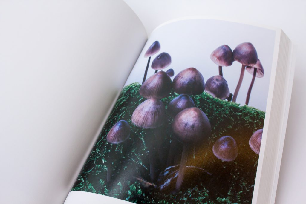 Page from <em>Mushrooms from the Forest 2011</em> by Takashi Homma